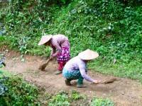Burma / Myanmar  - Namhsan to Hsipaw Trek  -  IMG_2293