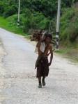 Burma / Myanmar  - Namhsan to Hsipaw Trek  -  IMG_1928