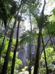 Australia -  Byron bay area, shannon falls - IMG_7808