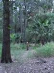 Australia - Carnarvon Gorge National park - IMG_6231