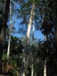 Australia - Carnarvon Gorge National park - IMG_6289