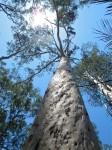 Australia - Carnarvon Gorge National park - IMG_6298