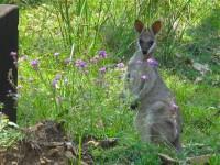 Australia - Carnarvon Gorge National park - IMG_6192