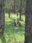 Australia - Carnarvon Gorge National park - IMG_6199