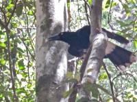 Australia - Carnarvon Gorge National park - IMG_6411