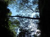 Australia - Carnarvon Gorge National park - IMG_6420