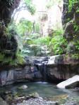 Australia - Carnarvon Gorge National park - IMG_6452