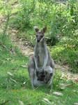 Australia - Carnarvon Gorge National park - IMG_6202