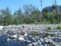Australia - Carnarvon Gorge National park - IMG_6463