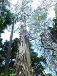 Australia - Carnarvon Gorge National park - IMG_6483