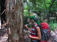 Australia - Carnarvon Gorge National park - IMG_6485
