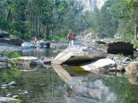Australia - Carnarvon Gorge National park - IMG_6498