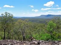 Australia - Carnarvon Gorge National park - IMG_6526