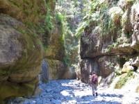 Australia - Carnarvon Gorge National park - IMG_6544