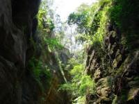 Australia - Carnarvon Gorge National park - IMG_6546