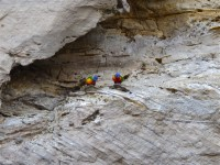 Australia - Carnarvon Gorge National park - IMG_6550