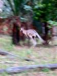 Australia - Carnarvon Gorge National park - IMG_6217