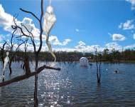 Australia, Daintree, Full  Eclipse Festival - IMG_4063