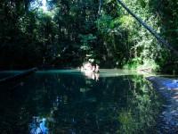 Australia - Daintree Rainforest, Blue Hole, Thronton Beach - IMG_5334