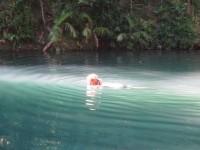 Australia - Daintree Rainforest, Blue Hole, Thronton Beach - IMG_5337
