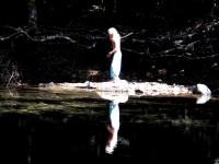 Australia - Daintree Rainforest, Blue Hole, Thronton Beach  - IMG_5382