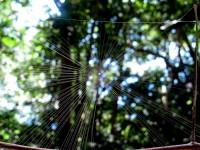 Australia - Daintree Rainforest, Blue Hole, Thronton Beach  - IMG_5398