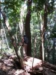 Australia - Daintree Rainforest, Blue Hole, Thronton Beach  - IMG_5468