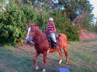 Australia -  Glass tree house farm - IMG_7565