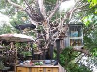 Australia -  Glass tree house farm - IMG_7652