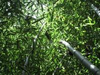 Australia - Joshepine falls, Paronela park - IMG_5744