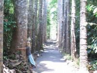 Australia - Joshepine falls, Paronela park - IMG_5811