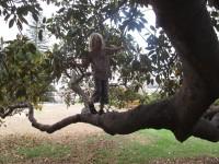 alternativetraveling.com - Australia - Sydney, art, culture, nature  - IMG_9246