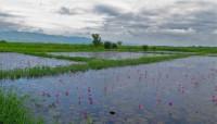 Myanmar, Burma - Inle Lake - IMG_1615
