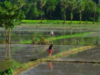 Myanmar, Burma South, Hpa An, Nwa-La Bo Pagoda - IMG_0487