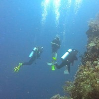 Alternativetraveling.com, Travel with Family, Alternative travel, alternative traveling, family travel, backpack, travel Indonesia travel, Wakatobi, Tomia Island, Dive Tomia, Magnifica Dive, Hoga Island, Dive Hoga