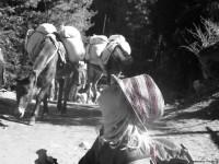 ITrekking Nepal, Kathmandu, Annapurna Circuit TrekMG_3560