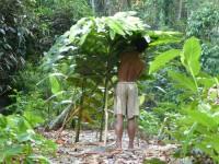 Philippines  -  Palawan, Cleopatra Niddle jungle trek, Batak tribe - P1000300