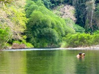 Philippines  -  Palawan, Cleopatra Niddle jungle trek, Batak tribe - P1000382