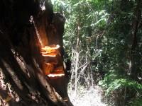 Philippines  -  Palawan, Cleopatra Niddle jungle trek, Batak tribe - IMG_1510