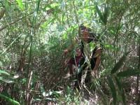 Philippines  -  Palawan, Cleopatra Niddle jungle trek, Batak tribe - IMG_1653