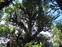 Philippines  -  Palawan, Cleopatra Niddle jungle trek, Batak tribe - IMG_1693