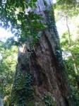 Philippines  -  Palawan, Cleopatra Niddle jungle trek, Batak tribe - P1000227