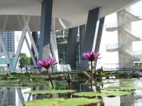 Singapore, Singapore City  - IMG_3747