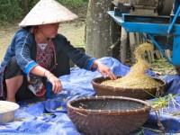Vietnam  North - Tac Ba  lake and yao village  - IMG_2440