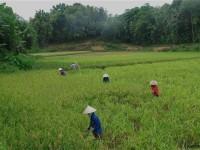 Vietnam  North - Tac Ba  lake and yao village  - IMG_2510