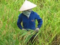 Vietnam  North - Tac Ba  lake and yao village  - IMG_2512