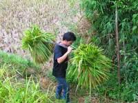Vietnam  North - Tac Ba  lake and yao village  - IMG_2519