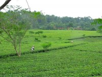 Vietnam  North - Tac Ba  lake and yao village  - IMG_2613