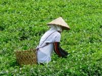 Vietnam  North - Tac Ba  lake and yao village  - IMG_2617