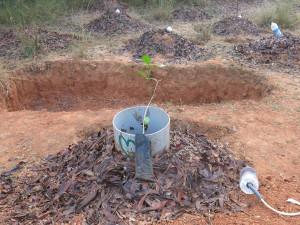 Alternativetraveling.com, India - Sadhana Forest - IMG_6037